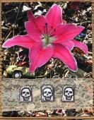 Collage wervingscampagne voor frisdrank (2007)