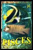 Sterrenbeeld: Vissen - De Telegraaf (2009)